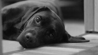 Divorce chien